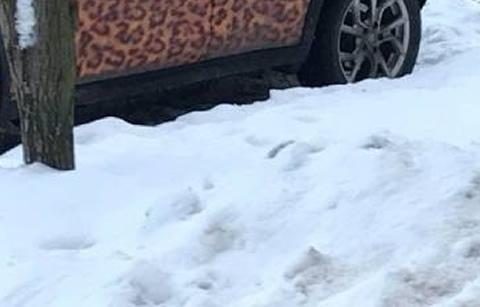 leopard pattern_s