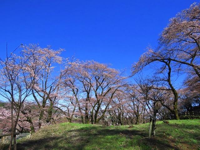 20津久井湖城山公園