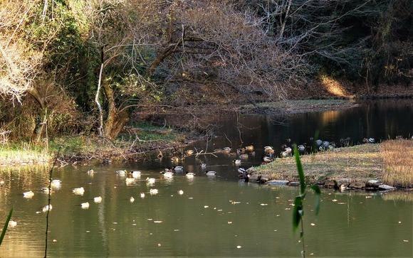 17谷戸山公園