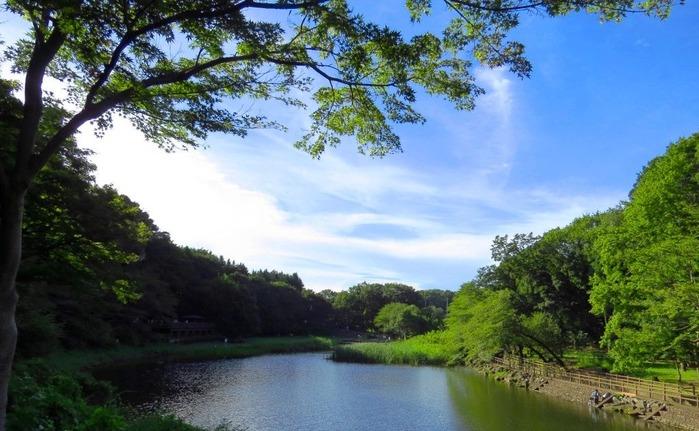 18泉の森