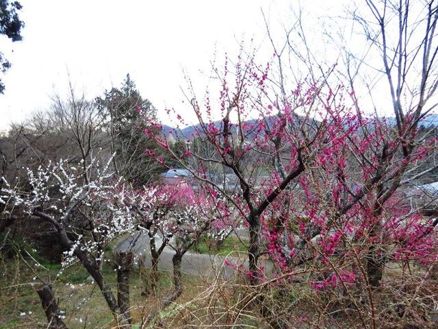 10津久井湖城山公園