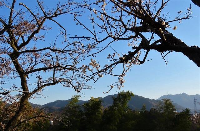 13津久井湖城山公園