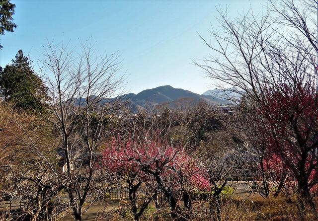 16津久井湖城山公園