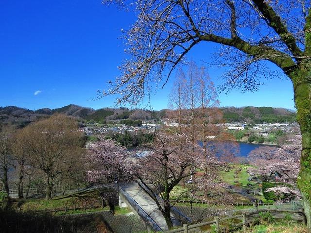 21津久井湖城山公園