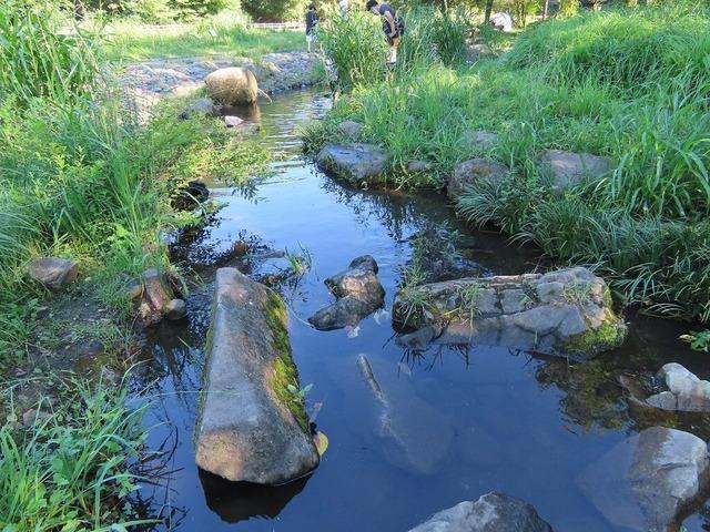 10泉の森