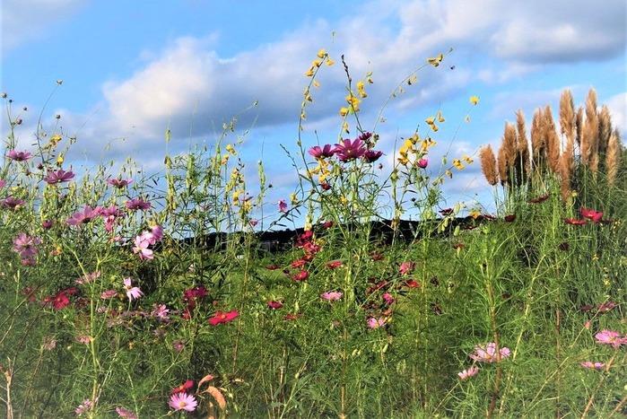 19畑の花園