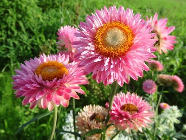 13畑の花