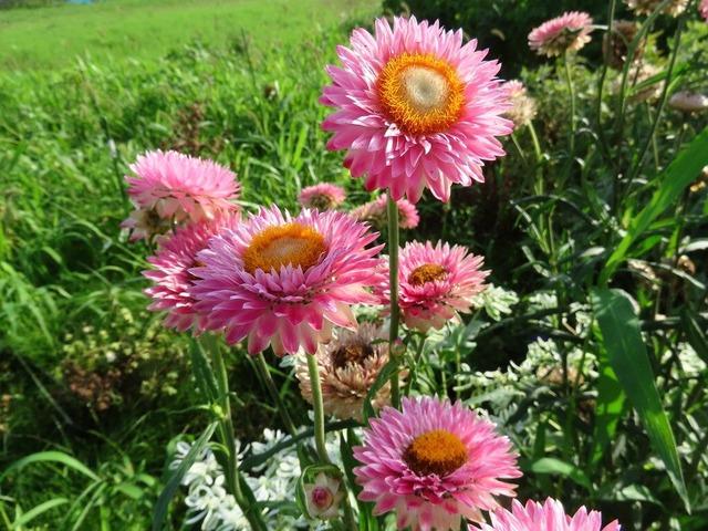 14畑の花