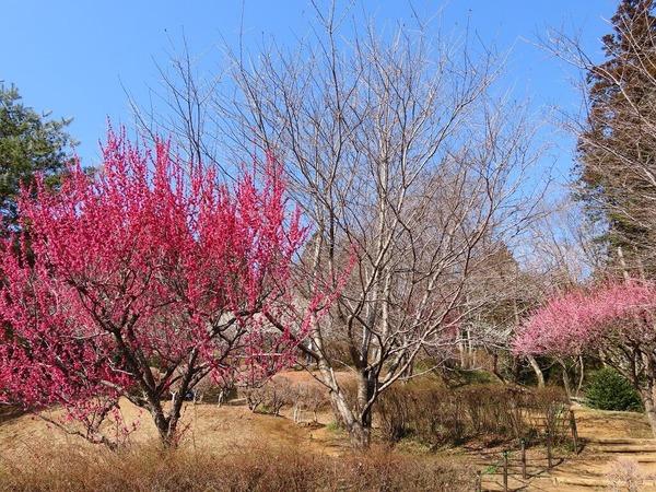 15津久井湖城山公園