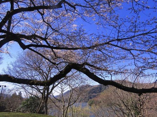1津久井湖