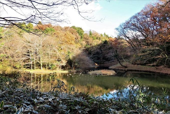 16谷戸山公園