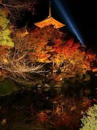 京都 紅葉 見ごろ 三重の塔 放生池前