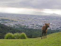 奈良奥山景色