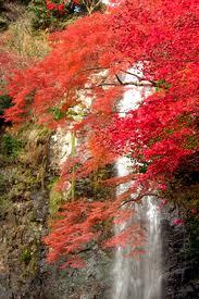 箕面公園 箕面の滝 紅葉