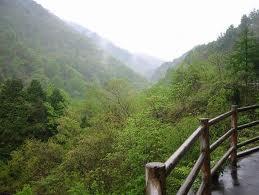 桑の木の滝森林浴