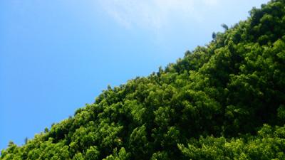 C植木と空1