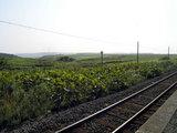 根室本線・花咲駅ホームからの眺め