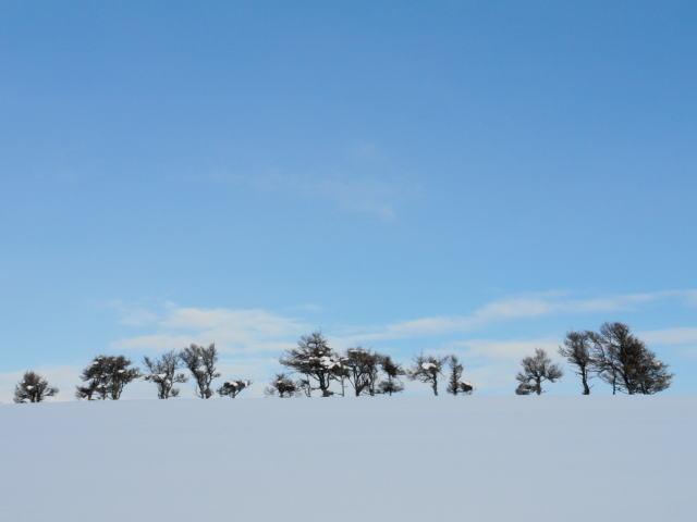 丘の上の木立ち