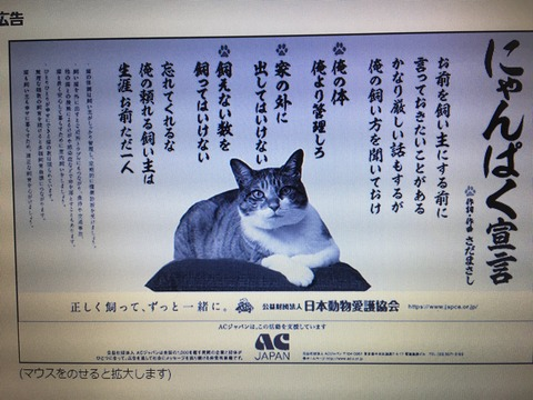 IMG_1874 - コピー