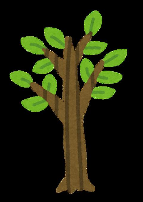 tree_seichou05