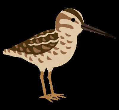 bird_tashigi
