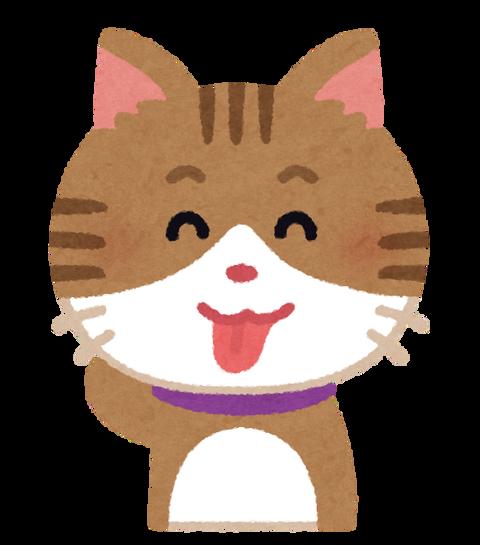 【悲報】うちの猫、おっさんだったwww
