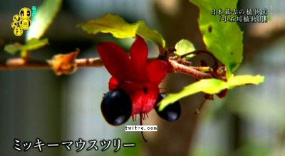 pictures(20140809-121203)