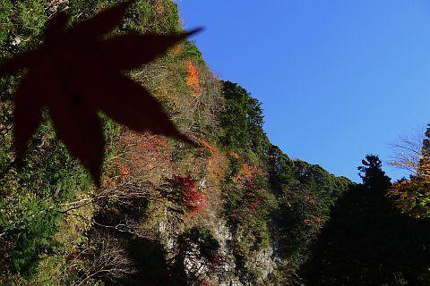 2m Colored Leaves 2010(3) P1020098-2-c