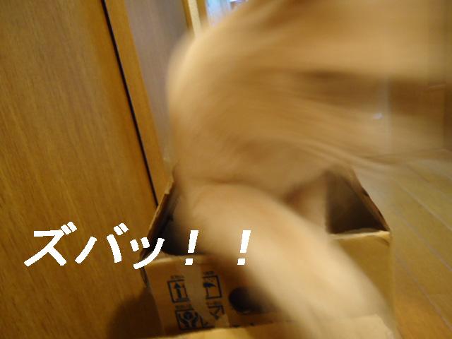 ビックリ9