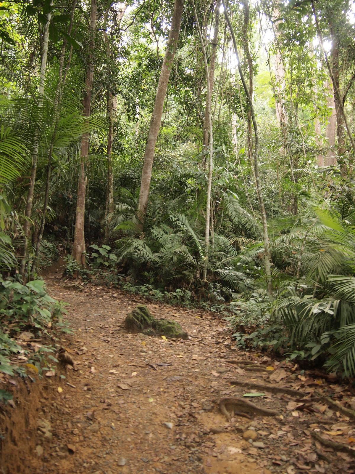 マレーシア:キナバル国立公園