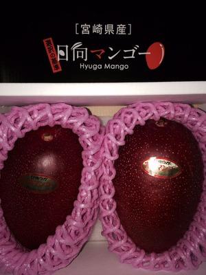 宮崎マンゴー1
