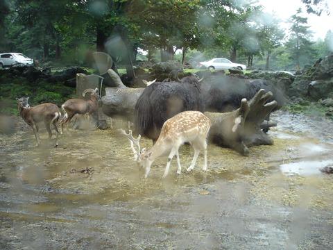 safari-8