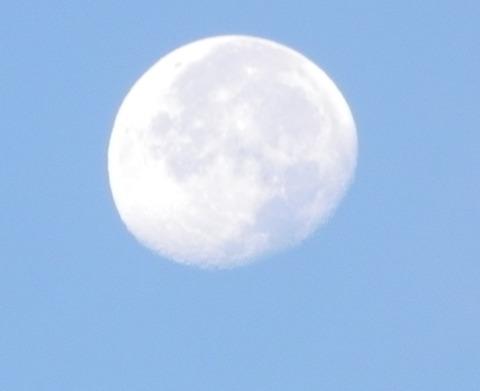 昼の月-2