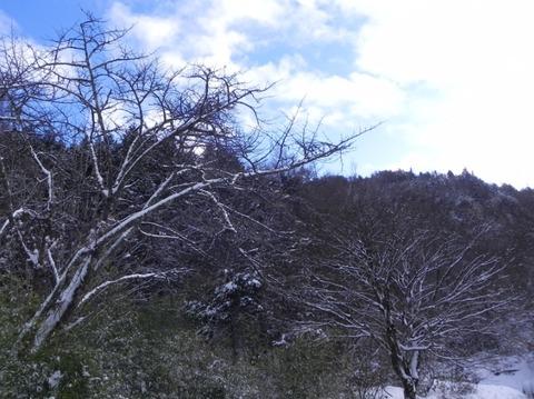 景色-雪03