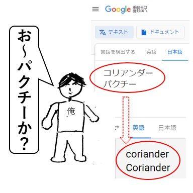 コリアンダー4