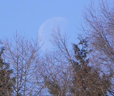 景色-月と杜04
