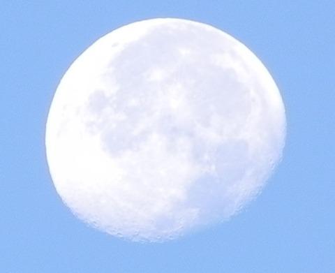 昼の月-1