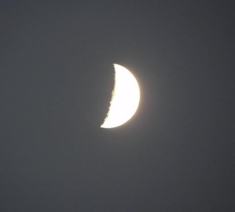 夕方の月-3