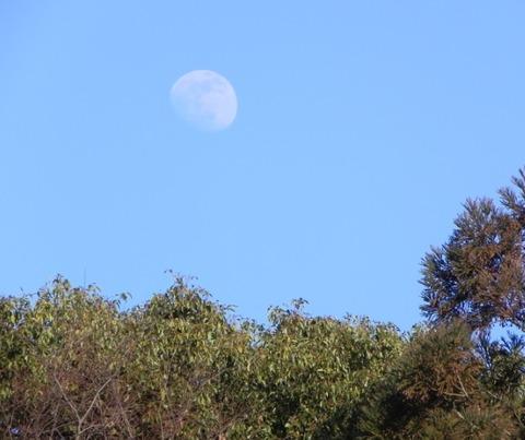景色-月と杜05