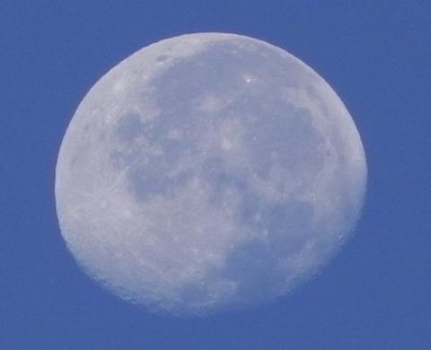昼の月-4