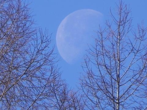 景色-月と杜02