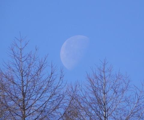 景色-月と杜03