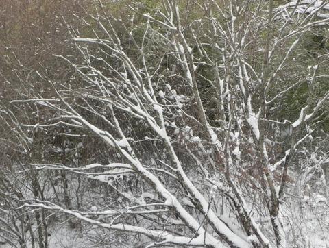 景色-雪06
