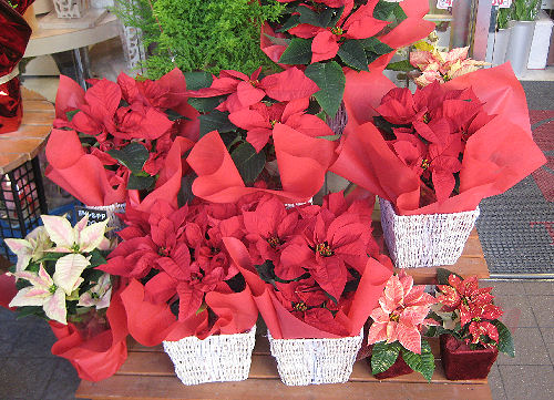 12月の花