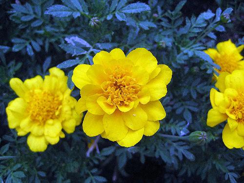 黄色い花98