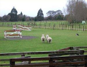 まよえる羊たち