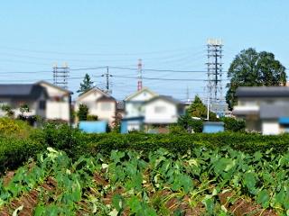 tokorozawa_kamegane_mzn6-7