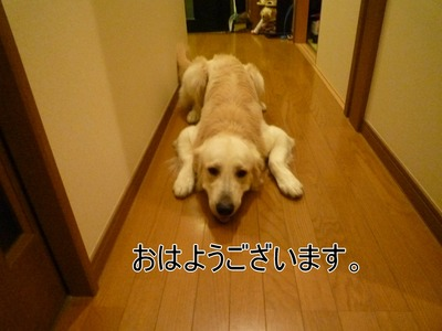blog1_091027
