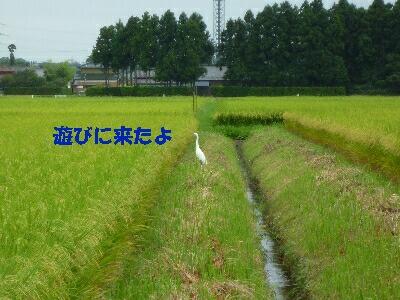 blog3_090831