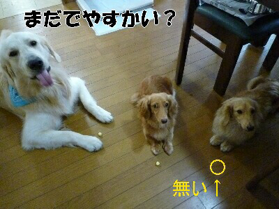 blog3_090829